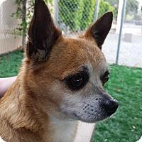 Adopt A Pet :: Xander - Chula Vista, CA