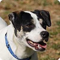 Adopt A Pet :: Cosmo - Toccoa, GA