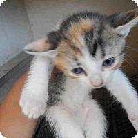 Adopt A Pet :: A380621 - San Antonio, TX