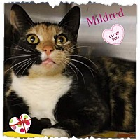 Adopt A Pet :: Mildred - Harrisburg, NC