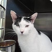 Adopt A Pet :: Titan - Elyria, OH