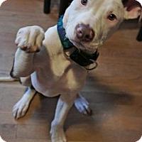 Adopt A Pet :: Mason - Framingham, MA