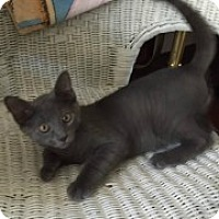 Adopt A Pet :: Jasper - McHenry, IL