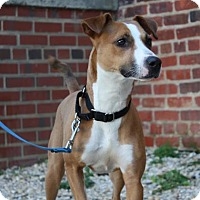Adopt A Pet :: Jaina - Richmond, VA