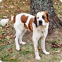 Adopt A Pet :: Jewelz - Oswego, IL