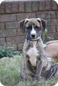 Hound (Unknown Type) Mix Puppy for adoption in Marietta, Georgia - Ryder