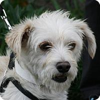 Adopt A Pet :: Nugget - Carlsbad, CA