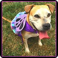 Adopt A Pet :: Elsa - Salisbury, NC
