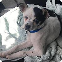 Adopt A Pet :: Porky - Houston, TX