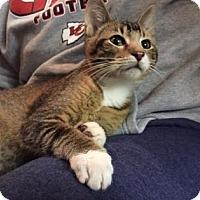 Adopt A Pet :: Georgie - Wichita, KS
