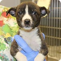 Adopt A Pet :: Jolly - Philadelphia, PA