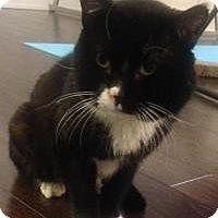 Adopt A Pet :: Sammy - Worcester, MA