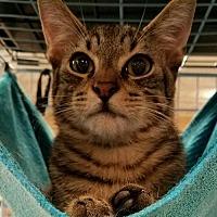 Adopt A Pet :: Victory - Boynton Beach, FL
