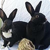 Adopt A Pet :: Poppy and Sunflower - El Cerrito, CA