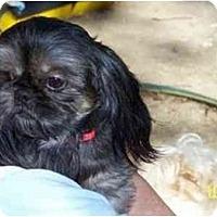 Adopt A Pet :: Phoebe - Dayton, OH