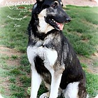 Adopt A Pet :: Zoe Girl - Scottsdale, AZ