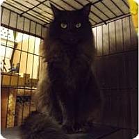 Adopt A Pet :: Odi - Modesto, CA