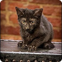 Adopt A Pet :: Basel - Owensboro, KY