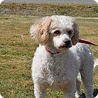 Adopt A Pet :: Harley - Tumwater, WA