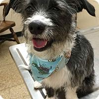 Adopt A Pet :: Orion - Los Angeles, CA