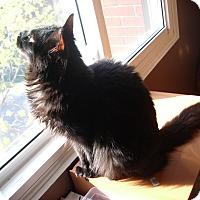 Adopt A Pet :: Musti - Toronto, ON