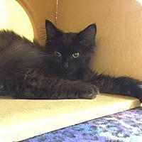 Adopt A Pet :: Farley (6314) - Tampa, FL