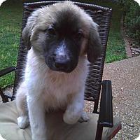 Adopt A Pet :: Aubrey - Enfield, CT