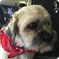 Adopt A Pet :: Raffi - Lodi, CA