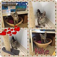 Adopt A Pet :: nike - Bryan, OH