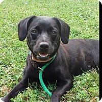 Adopt A Pet :: Penny - Paris, IL