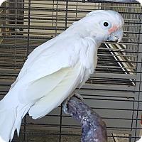 Adopt A Pet :: Ruby - Grandview, MO