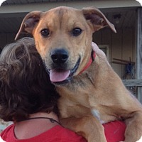 Adopt A Pet :: Scooby - Medora, IN