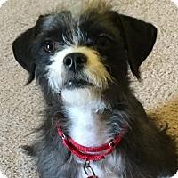 Adopt A Pet :: LOKI - Katy, TX