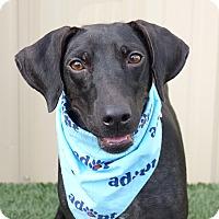 Adopt A Pet :: Madame Zeroni - Columbia, IL
