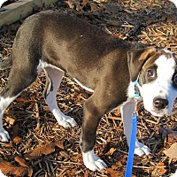 Adopt A Pet :: Dottie - Branson, MO