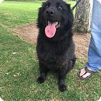 Adopt A Pet :: Rusty - San Diego, CA