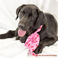 Adopt A Pet :: Maggie - Fayetteville, AR