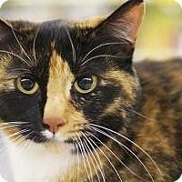 Adopt A Pet :: Abigail - Sacramento, CA