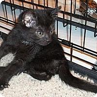 Adopt A Pet :: Lipton - Acme, PA