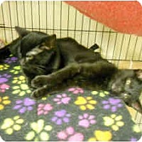 Adopt A Pet :: Blackie - Milwaukee, WI