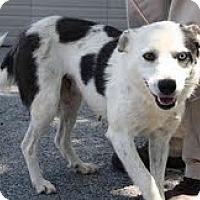 Adopt A Pet :: Daphne($200 adoptionfee) - Staunton, VA