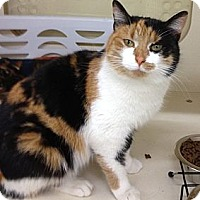 Adopt A Pet :: Aerabella - Troy, OH