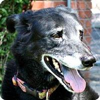 Adopt A Pet :: Scarlett - Evans, CO