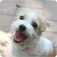 Adopt A Pet :: JACKSON - san diego, CA