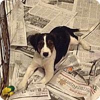 Adopt A Pet :: Mya - Washington, PA