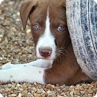 Adopt A Pet :: *Hyde - PENDING - Westport, CT