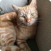 Adopt A Pet :: Judge (LE) - Little Falls, NJ
