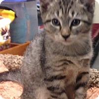 Adopt A Pet :: Marie - Long Beach, NY