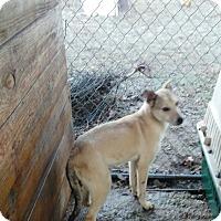 Adopt A Pet :: Jedd - springtown, TX