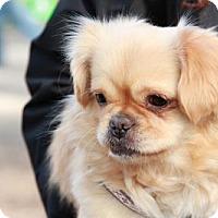 Adopt A Pet :: Mia - Morganville, NJ